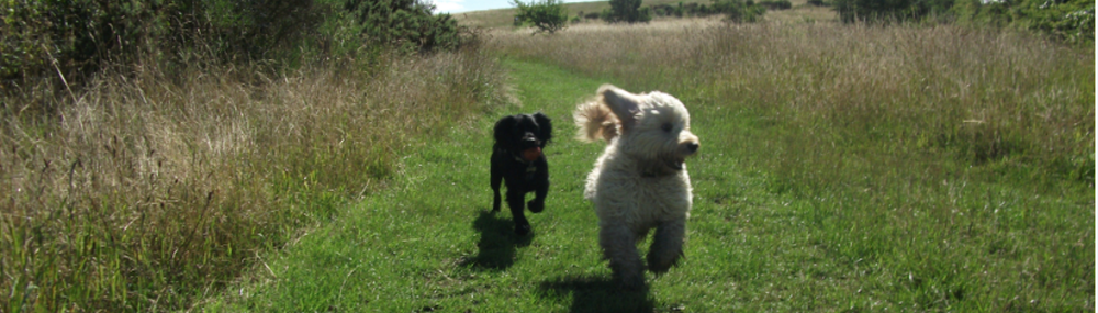 Furever Friends: Newcastle Dog Walking & Pet Sitting