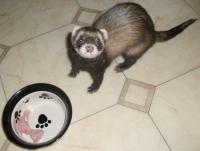 Pet Sitting Testimonial - Roscoe